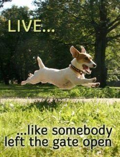 Vivi... come se qualcuno avesse lasciato il cancello aperto :)
