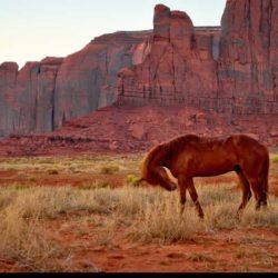 Il contadino e il cavallo, una storia sul bene e sul male